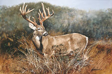 Texas Heritage (Monster Whitetail Buck) by Ragan Gennusa / Giclee on Canvas S/N