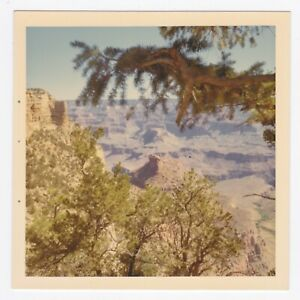 Square Vintage 60s PHOTO Scenic View of Grand Canyon thru Tree