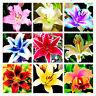 100pcs Rare Asiatic Lily Bulbs Seeds Planting Lilium Perfume Flower Garden HOT