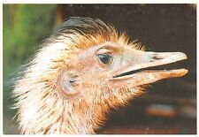 B8992 Oiseaux Birds Testa de Avestruz Paraguay