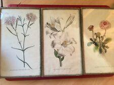 3 Antiguo W Curtis Botanic Garden c1790 grabados a mano flores de color Enmarcado