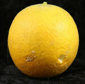 Faux fruit oranges x 2 2.5 inches tall decorative item