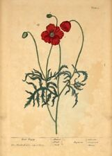 Red Poppy ELIZABETH BLACKWELL  Vintage Botanical Poster. A Curious Herbal
