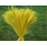 10Stk.Pfauenfedern Naturfedern Federn Pfauen Pfauenfeder 25-30cm Gelb Gold