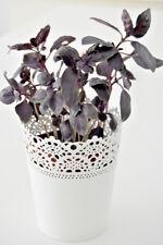 Albahaca dark opal - Ocimum basilicum - 500 semillas - Seeds