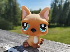 Littlest Pet Shop Authentic # 1847 Brown Tan White French Bulldog Blue Eyes