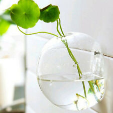 Wall Hanging Glass Flower Vase Hydroponic Terrarium Container-Half Ball 12cm