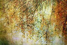 Advocate: Twelfth Night Fertig-Bild 60x90 Wandbild Bäume Wald