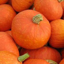 Pumpkin ORANGE KABOCHA-Pumpkin Seeds-GREAT ORANGE FLESH-15 FRESH HARVESTED SEEDS