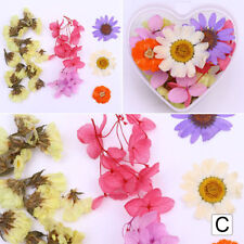 Mixed Dried Flowers 3D Nail Art Decoration Preserved Flower  Tips DIY