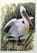 ROMANIA PELLICANO WWF Bird PANEL PASTIGLIA Primo Giorno 1° FDC 3234