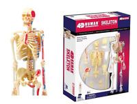 1Set 4D Human Human Skeleton Bones Anatomy Body Anatomical Teaching Model