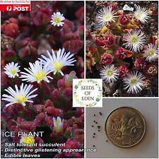 15 ICE PLANT SEEDS (Mesembryanthemum crystallinum); Ornamental succulent plant