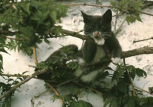 Carte postale les chats de Hans Silvester Année 2002 éditions la Martinière
