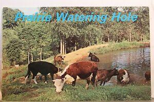Scenic Prairie Watering Hole Postcard Old Vintage Card View Standard Souvenir PC