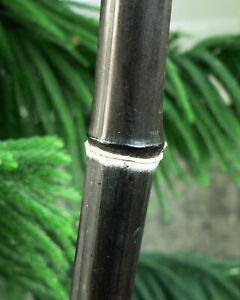 Exotisch i! SCHWARZER-Bambus !i kann man beim Wachsen zusehen - einfach Samen