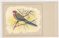 CP POSTCARD Oiseau Bird Perruche ommicolore Piatycercus splendidus n54