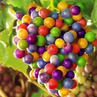 120PCS Colourful Non-GMO Super Sweet Grapes Fruits Seeds Home Garden Trees And F