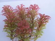 Wholesale 6 Miniature Autumn Green Red Foliage Plant Tree Dollhouse Garden TR2