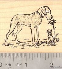 Great Dane with Flowers Rubber Stamp J16203 Wood Mounted
