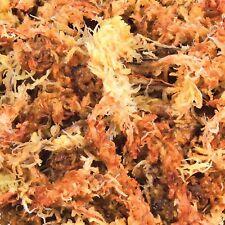 Sphagnum Moss Vivarium Substrate for Humid Tropical Terrariums 4.5 Litre