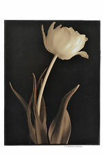 Wood White Tulip Flower on Black Background Modern Wall Art Sign Plaque