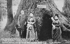 "Big Trees ""General Fremont"" Santa Cruz, California Vintage Postcard ca 1910s"