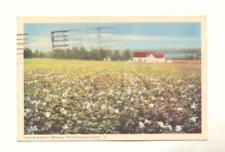 Field of Potatoes Bedeque Prince Edward Island Vintage Postcard