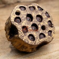 "1pc Chinese Yixing Purple Clay Handmade ""Lotus seeds""Tea Pet Decoration"