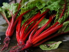 500 Ruby Red Swiss Chard Seeds - COMB S/H