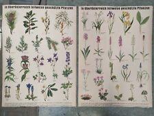 2Stk  Lehrtafel Schulwandkarte 60ger. Geschützte Pflanzen in Oberösterreich