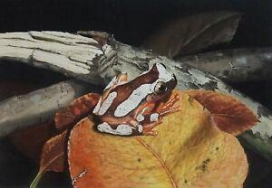 KEVIN STEAD (XX) RARE Original Gouache Frog 1985 Nature Animal South Australia