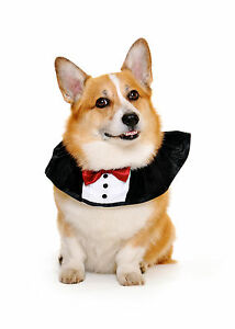 Dog collar tuxedo - bow tie, Size L New in Bag Made in the USA