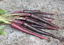 CARROT 'Cosmic Purple' 100+ seeds ORGANIC unusual vegetable garden HEIRLOOM