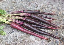 CARROT 'Cosmic Purple' 100+ seeds ORGANIC unusual vegetable garden HEIRLOOM