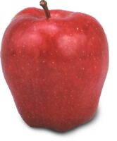 USA Heirloom Organic Red Delicious Apple Tree 10-80 seeds