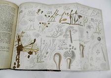 SEHR SELTEN : PARASITOLOGISCHE UNTERSUCHUNGEN - NEISSER, HALLIER, DE BARY - 1864