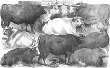 COWS. Hereford, Devon, Shorthorn, Cow, Ox, antique print, 1856