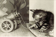 1957 Russian postcard CAT PREPARES THE CANNON FOR LOCAL MILITARY MANEUVERS