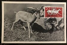 1956 East Berlin DDR Germany RPPC Maxi Postcard Cover Wild Sheep