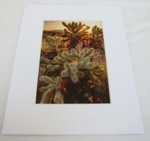Sunset Joshua Tree National Park CA 5x7 Photograph signed Brian Blackwelder #03