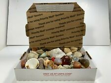 Assorted Rock Collection - Over 3lb of Seashells - Quartz - Fossils - Minerals!!