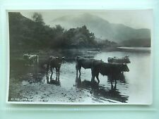 Cattle Cows By the Loch Side, SCOTLAND POSTCARD