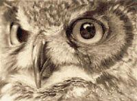 Tawny Owl Counted Cross Stitch Kit Wildlife Birds