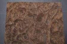 Walnut Burl Raw Wood Veneer Sheet 875 X 105 Inches 142nd Thick 7727 23