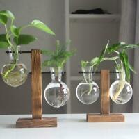 Only Pot , Wooden Stand Hanging Glass Terrarium Container Hydroponics Vase Decor