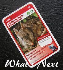 Woolworths<AUSSIE ANIMALS><Series 2 Baby Wildlife>CARD 23/36 LAND Bandicoot