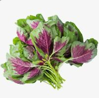 500 Seeds Thai Amaranth Green Red (Asian Spinach) Organically Grown Plants