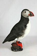 Puffin. Arctic Taxidermy. Taxidermy Bird.