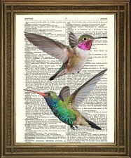 """VINTAGE DICTIONARY PAGE PRINT: Beautiful Humming Birds, Red, Green Art (8x10"""")"""